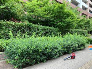 植栽の剪定及び除草作業が行われました。